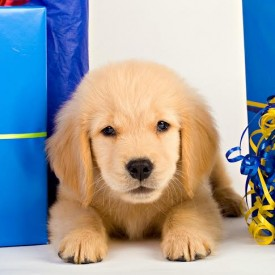Gift ideas for pets and pet owners