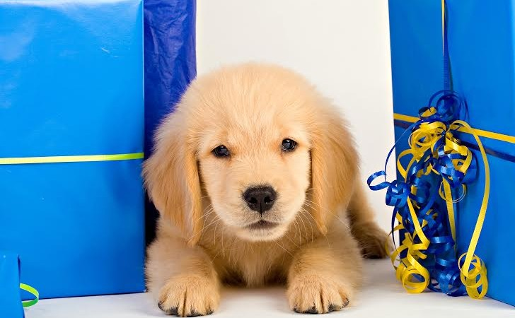 Pet Gift Basket Ideas For Dogs